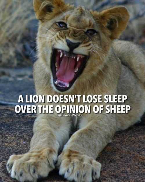 A Lion Doesnt Lose Sleep Over The Opinion Of A Sheep Tag A