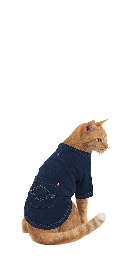 PajamaJeans® for Cats  This makes me giggle...