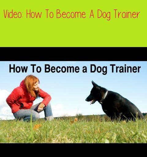How To Become A Dog Trainerthere Are Many Ways To Become A Dog