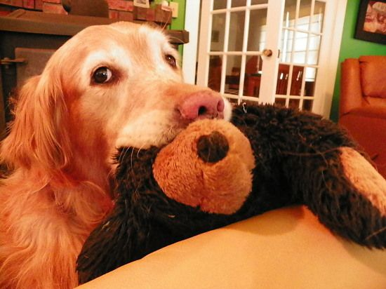 Duke with his favorite bear!