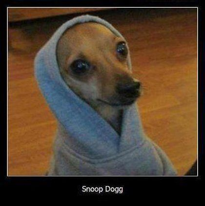 Snoop Dogg....ahaha its an italian greyhound I think ...