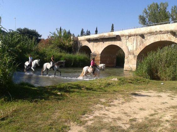 Paseos a caballo por el Turia