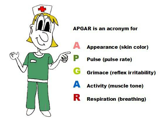 Apgar Score For Ob Clinicals Nursing School Pinterest