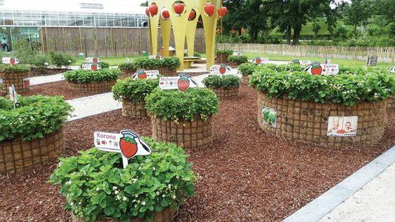 raised hay bale strawberry beds vegetable garden ideas