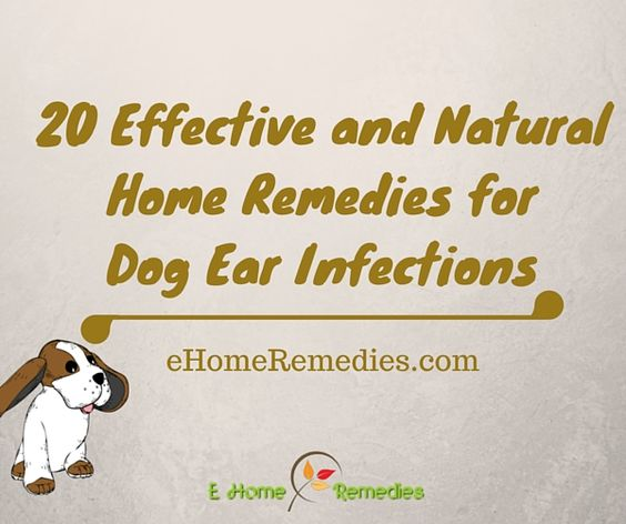 20 Effective And Natural Home Remedies For Dog Ear