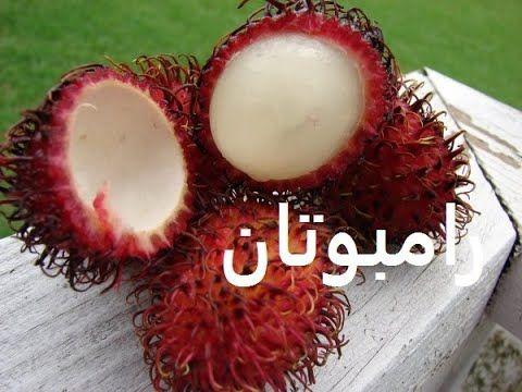 رامبوتان زراعة من بذرة حتى ثمرة Rambutan حلقة 239 Plants Fruit Coconut