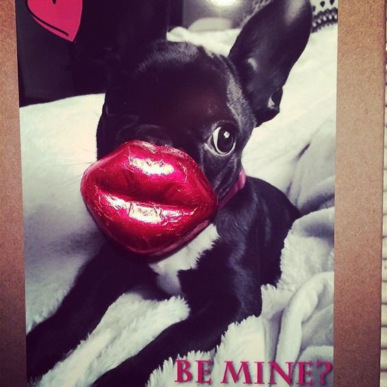Be Mine? #ValentinesDay #Frenchie