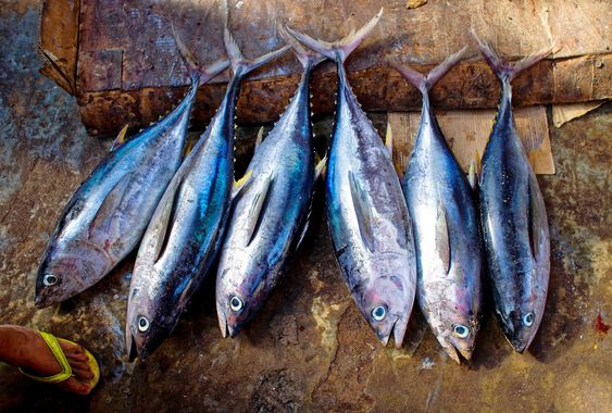Рыба тунец. Фото с сайта pixabay.com