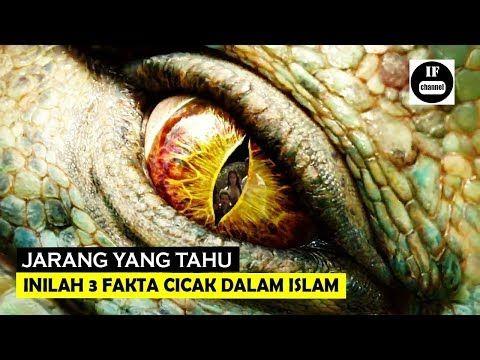 Hewan Terkutuk Inilah 3 Fakta Cicak Dalam Islam Yang Jarang