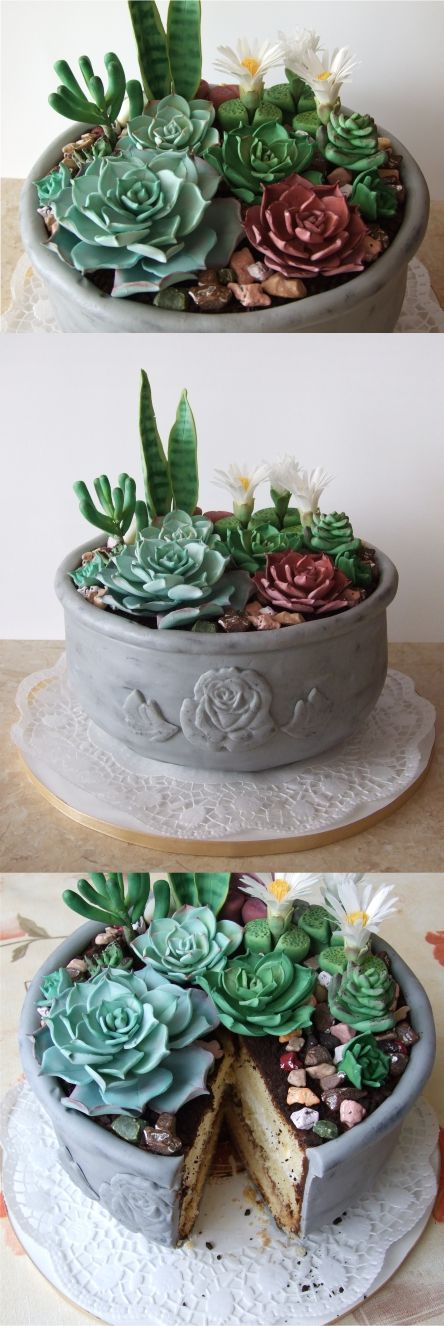 Succulent cake for mom. chokolate cobble , sugar succulents and  oreo  loam.