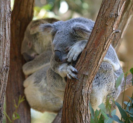 Setting Yourself Free with Eucalyptus Essential Oil | #Aromatherapy | @Amy Galper via Organic Spa Magazine Blog