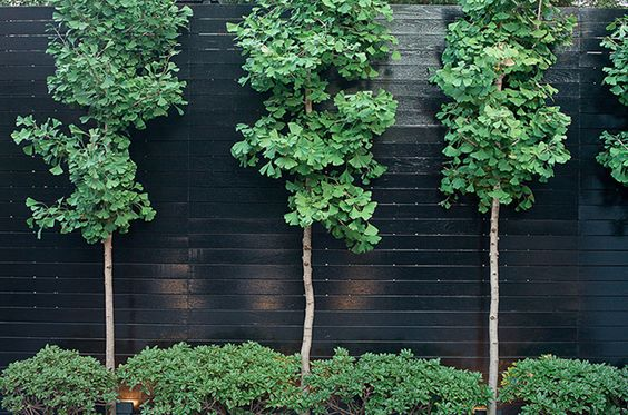 Black Fence Trees And Fence On Pinterest