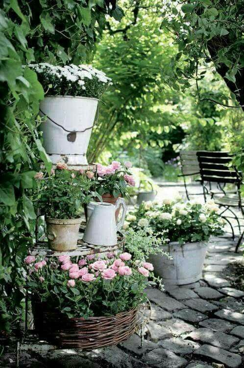 こうすればセンス良くまとまる♪ 初夏~夏のお花の寄せ植え集
