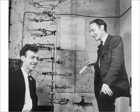 Francis Crick Left And James Watson In Cambridge They Created The First Double Helix Model Of Dna In 1953 Photograph Ap