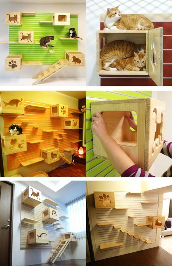 Katzenkletterwand schwebende Bretter und Kasten mit Türen .....alles was die Katze braucht und viel Auslauf zu haben