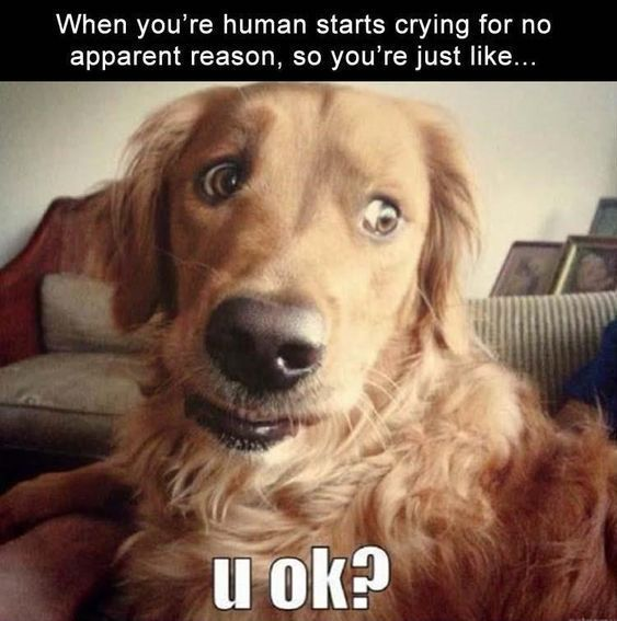 Funniest Animal Memes Of The Day That Are Extremely Hilarious 36 Pics Page 4 Of 4 Awed Owl Funny Animals Funny Animal Pictures Funny Dogs