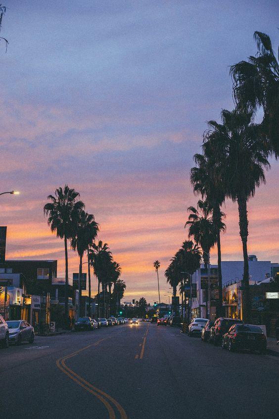 venice beach california / sunset / palm trees / photography