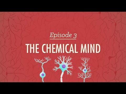 The Chemical Mind - Crash Course Psychology #3 - Really could have used this during Physiological Psych. Holy crap, Hank. (But I will use it for future reference, so brain doesn't block out that entire class)