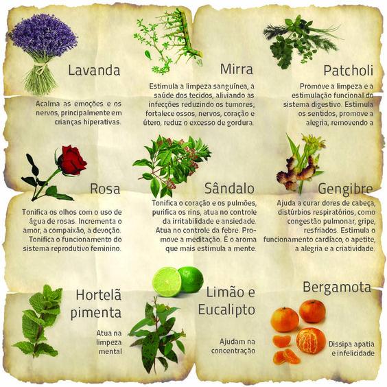 Plantas medicinais