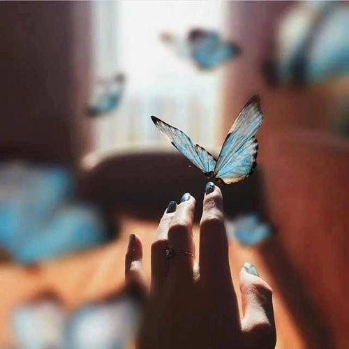 Image de butterflies