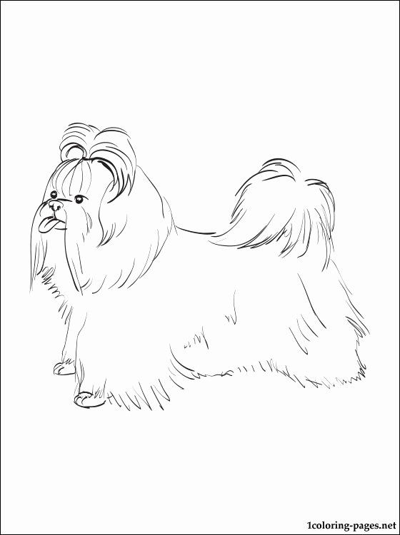 32 Shih Tzu Coloring Page Coloring Pages Sleeping Beauty