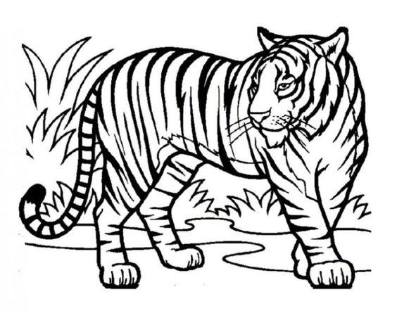 tiger ausmalbilder – Ausmalbilder für kinder