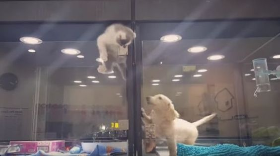 Kitten Escapes Pet Store Display To Meet Its Lonely Dog Friend - Kitten escapes pet store display to join lonely puppy