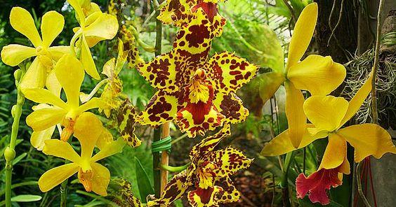 jardim-orquidea05.jpg