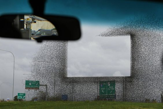 Ghost Billboard On U.S.- CanadianBorder  Created by an art studio called Lead Pencil Studio on a U.S. government commission. The billboard stands on the U.S./Canada border and is intended to highlight the proliferation of signage on that part of the border.: Art Studios, Ghost Billboard, Removed Road, Studio Called, Post Ghost