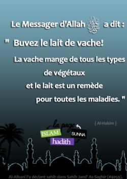 """D'après 'Abdullah ibn Mas'oud (radhiAllahu'anhu), le Prophète (sallallaahu 'alayhi wa sallam) a dit:   """"Buvez le lait de vache! La vache mange de tous les types de végétaux, et le lait est un remède pour toutes les maladies.""""    Collecté par Al-Hakim (8274). Al-Albani l'a déclaré sahih dans Sahih Jami' As-Saghir (4059)."""