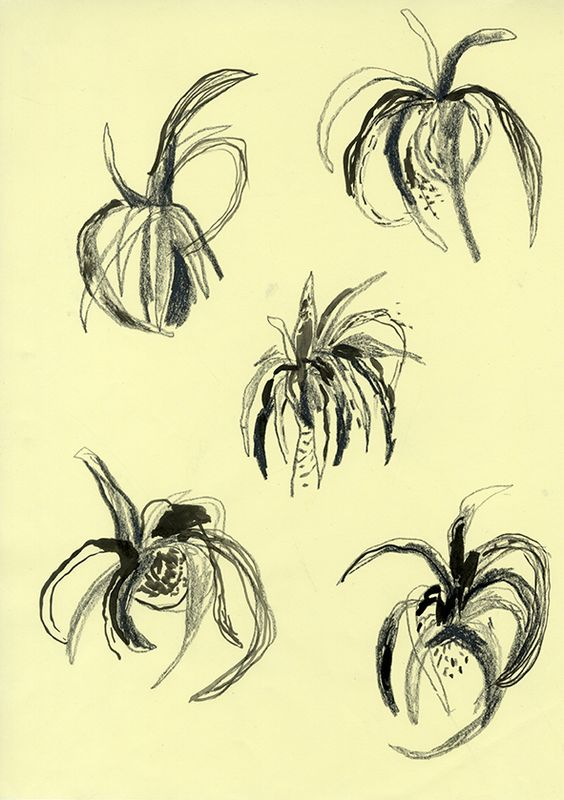 Plant Life - PassionforPrint