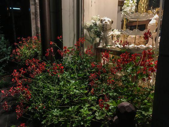 Вечерние витрины Калининграда, цветы не боятся осени. Фото Жени Шведы