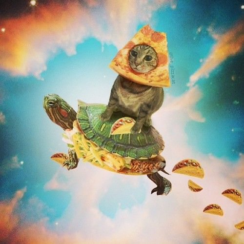 Image result for cute elephants flying with tacos