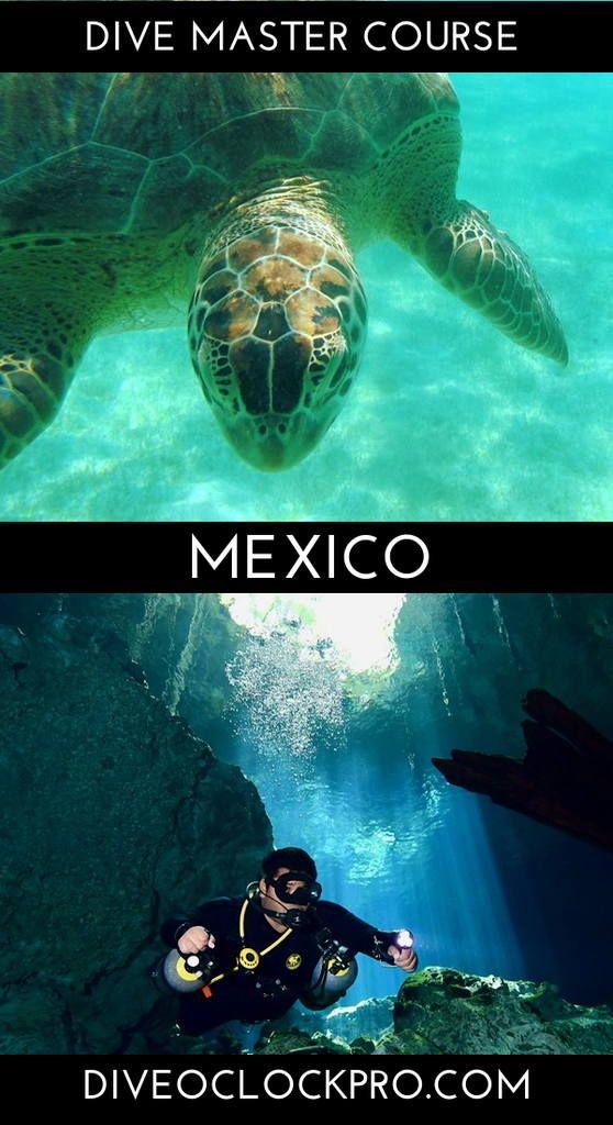 Padi Divemaster Course Tulum Mexico Click For Details Www Diveoclockpro Com Padi Dive Instructor Diving Scuba Diving Courses Scuba Travel
