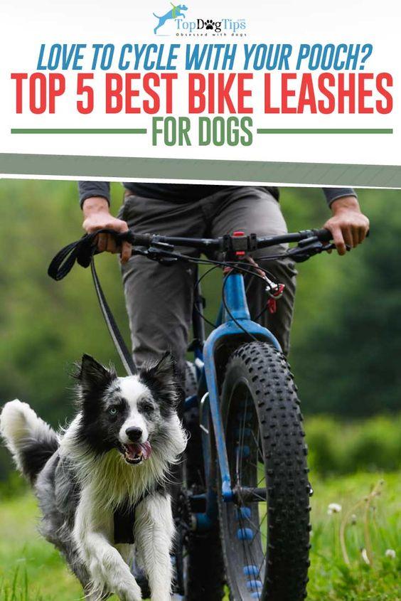12 Best Dog Bike Leashes Hands Free Biking With Dog Dog Bike