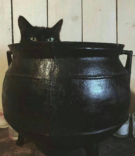 Cats & Cauldrons