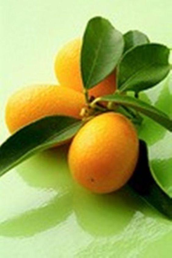 Meiwa kumquat recipes salad