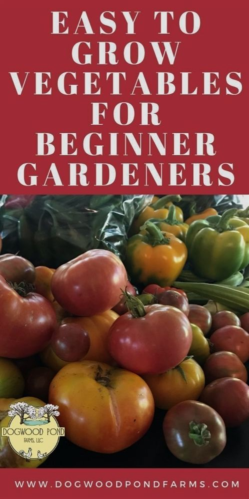 How To Succeed With Your Own Organic Garden In 2020 Easy
