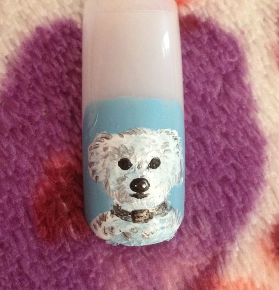 Hand painted bichon frise dog
