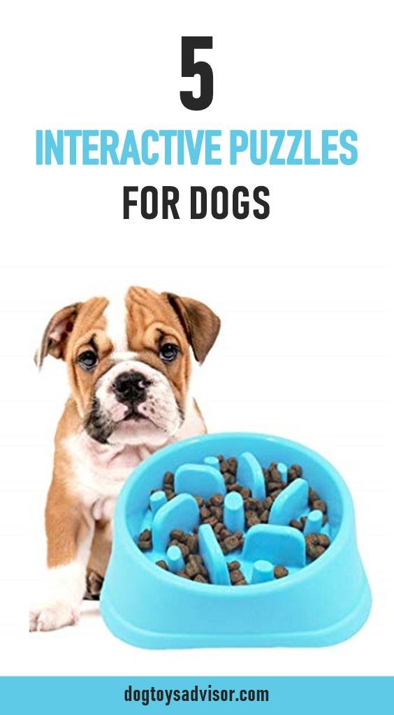 Top 5 Best Puzzle Toys For Dogs Interactive Dog Toys Are The Best