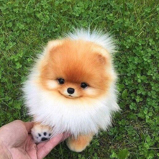 24 Cute Puppies That You Will Love Cute Little Animals Baby Animals Funny Cute Baby Animals