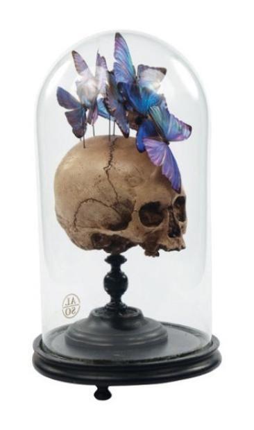 Globe comprenant une vanité en plâtre patiné avec un envol de papillons Morpho. H_42 cm L_20 cm