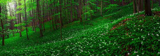 ramson forest by Martin Amm on 500px