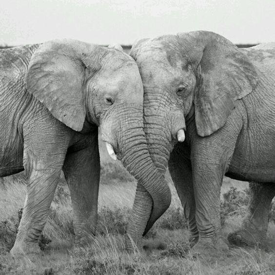 Elephants  @Diana Stohmann