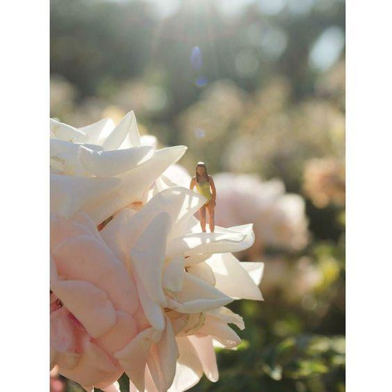 Cómo no amar la luz del verano?  #enelbosque #terrarium #terrario #miniature #pequeñoshabitantes #pequeñosmundos #homedecor #nature #naturelovers #plantslovers #plantas #plants #loveplants #flowers #flores #flower #flor #naturaleza #spring #luz #light