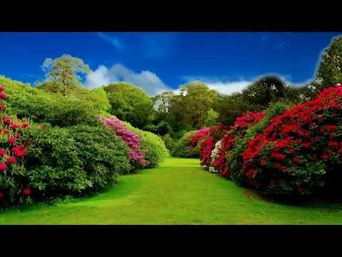 Hd 1080p Beautiful Flower Garden Video Royalty Free Flourish