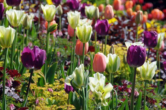 Summer bulb planting tips