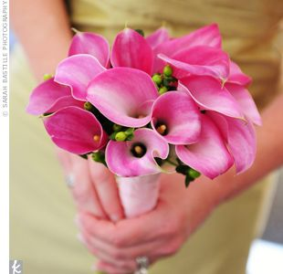 Pink Caly Lily's