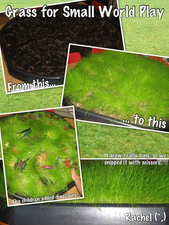 """Growing grass from seed, for small world play - by Rachel ("""",)"""
