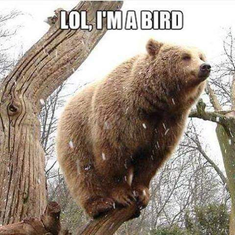Imma bird bear memes
